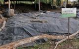 De acuerdo con expertos, en 15 días podría tenerse un compostaje óptimo para mejorar la condición del suelo. Foto: www.agenciadenoticias.unal.edu.co.