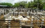 Mantener el predio aseado genera estatus y ganancias económicas. Foto: guamopazyregion.blogspot.com