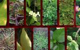 Una de las recomendaciones es evitar el sobrepastoreo para impedir el crecimiento de plantas tóxicas. Foto: CONtexto ganadero.