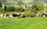 Muchas de las enfermedades que atacan al ganado se controlan con prácticas de bioseguridad. Foto: Fedegán.