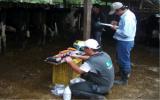 Desde 2005, el Institutco Colombiano Agropeuario, ICA, avaló al Comité de Huila como organismo de inspección. Foto: CVONtexto ganadero.