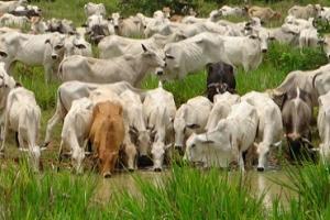 Ganadero, reserva agua para sus bovinos, pero recuerde que debe ser agua de calidad. Foto: CONtexto Ganadero.
